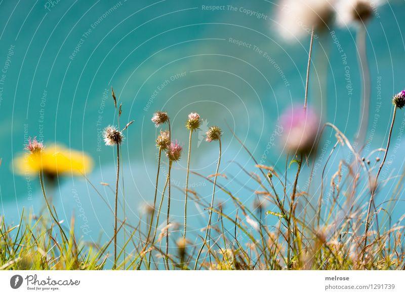 Blümsche Natur Pflanze schön Sommer Wasser weiß Sonne Erholung Blume gelb Gras Stil See Wachstum leuchten elegant