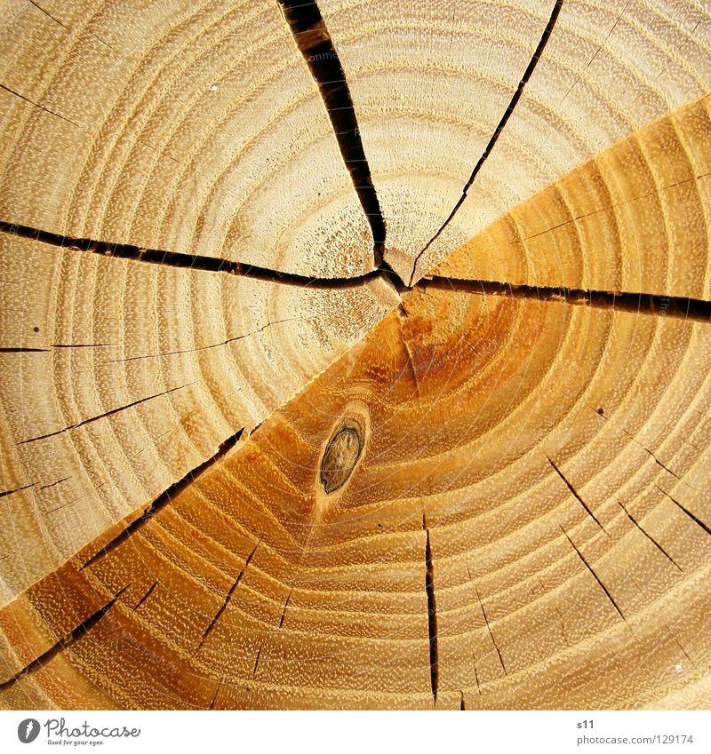 hOlz Holz Baum Baumstamm rund unentschlossen Ordnung fällen Axt Säge Brennholz heizen gefallen braun hellbraun Jahresringe gezeichnet Makroaufnahme Nahaufnahme
