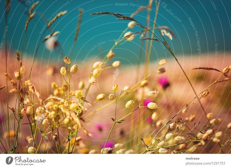 """"""" goldig """" Natur schön Sommer Wasser Erholung Blume Landschaft ruhig Blüte Gras Stil See träumen Zufriedenheit leuchten elegant"""