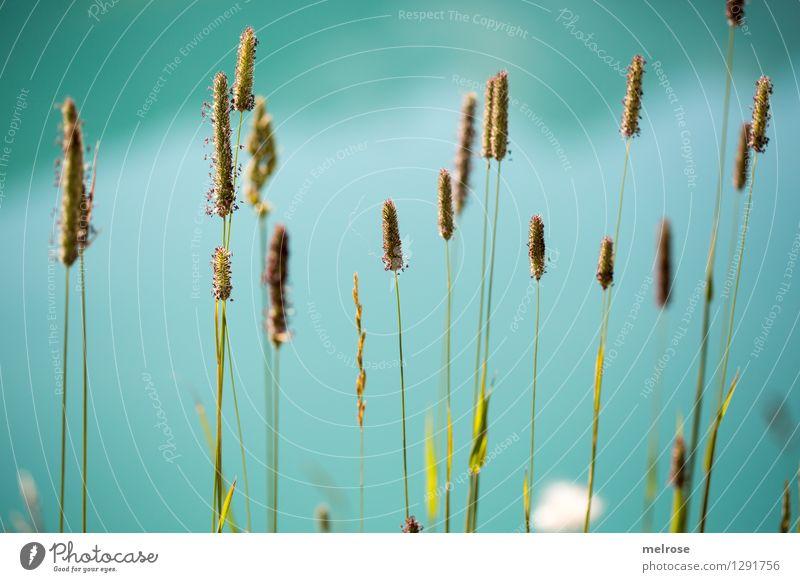 in Reih und Glied Natur grün schön Sommer Wasser Erholung Umwelt Gras Stil See braun Stimmung träumen Wachstum elegant stehen