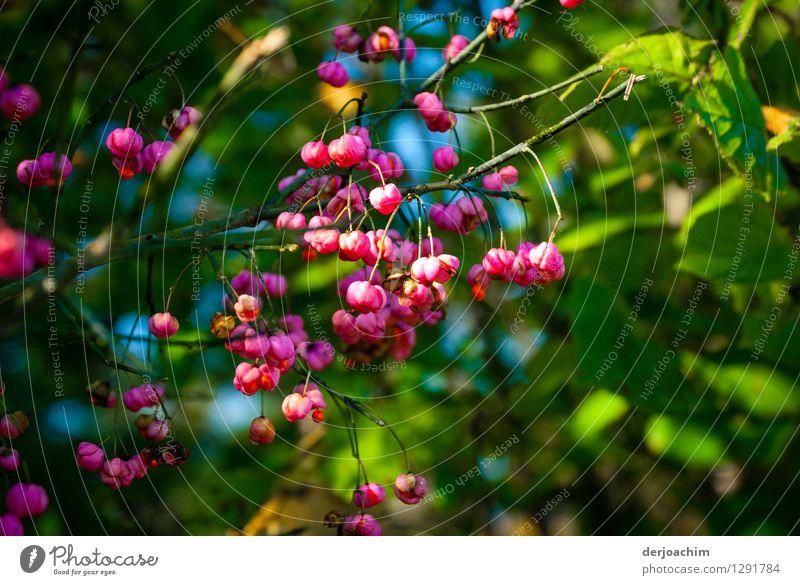 es blüht Natur Pflanze schön Sommer rot natürlich Glück außergewöhnlich Deutschland Park ästhetisch Lächeln genießen fantastisch Schönes Wetter Wohlgefühl