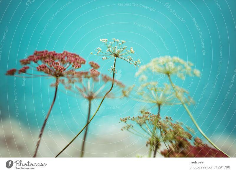 ein wenig türkis elegant Stil Natur Wasser Sommer Schönes Wetter Pflanze Blume Sträucher Blüte Wildpflanze See Lünersee Gebirgssee Brand Vorarlberg Österreich