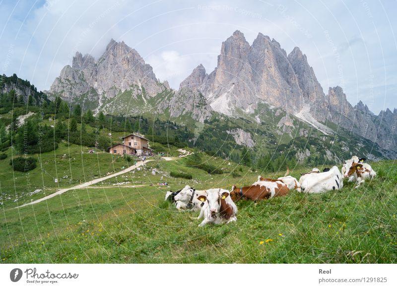 Almleben Himmel Natur Ferien & Urlaub & Reisen Sommer Landschaft Wolken Tier Berge u. Gebirge Umwelt Wiese grau Felsen Tourismus wandern Tiergruppe Abenteuer