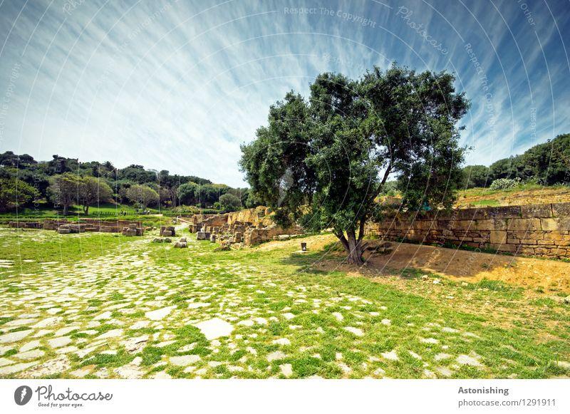 der Baum Umwelt Natur Landschaft Pflanze Himmel Wolken Horizont Sommer Wetter Schönes Wetter Gras Sträucher Wald Rabat Marokko Ruine Mauer Wand Stein alt blau