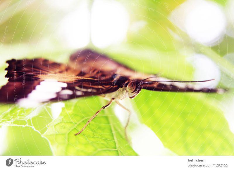 augen auf! Natur Pflanze grün schön Sommer Baum Erholung Blatt Tier Frühling Wiese Garten außergewöhnlich fliegen Beine braun