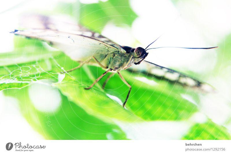 starrsinn Natur Pflanze Tier Frühling Sommer Schönes Wetter Baum Blatt Garten Park Wiese Wildtier Schmetterling Tiergesicht Flügel 1 Erholung fliegen Fressen