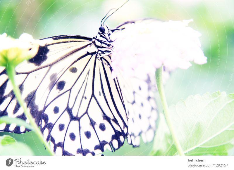 gut abgehangen Natur Pflanze Tier Frühling Sommer Schönes Wetter Blume Blatt Blüte Garten Park Wiese Wildtier Schmetterling Tiergesicht Flügel Weiße Baumnymphe