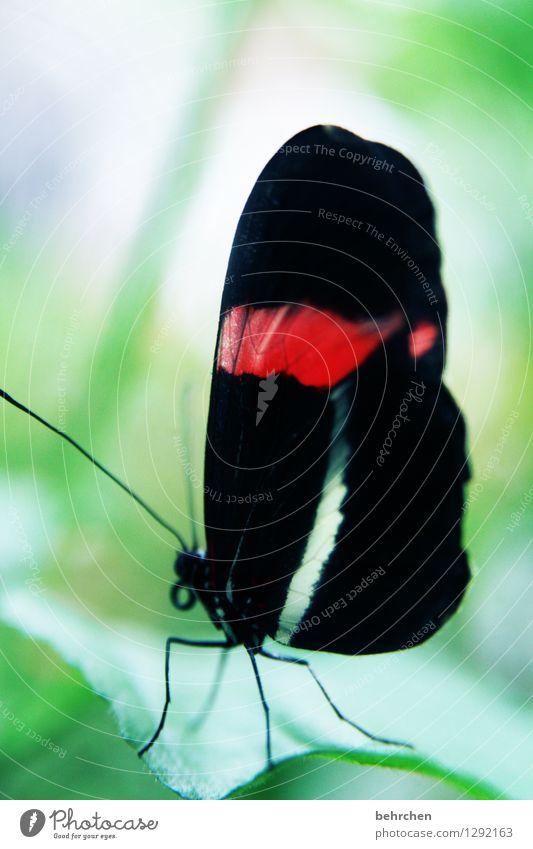einfach schön Natur Pflanze grün Sommer weiß Baum Erholung rot Blatt ruhig Tier schwarz Frühling Wiese Garten