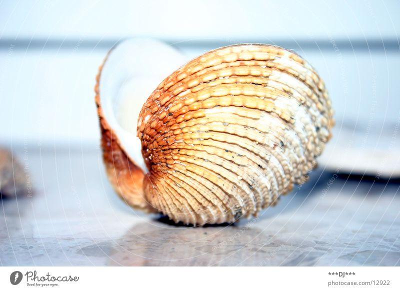 Muschel öffne dich! Meer Strand finden Suche Perle tauchen Schmuck Australien Wasser