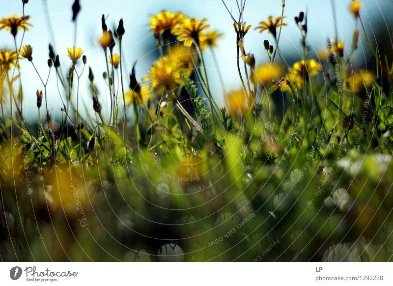 Lagen Umwelt Natur Landschaft Pflanze Urelemente Klima Schönes Wetter Blume Blatt Blüte Wildpflanze Garten Park Wiese Feld Coolness einfach fest Flüssigkeit