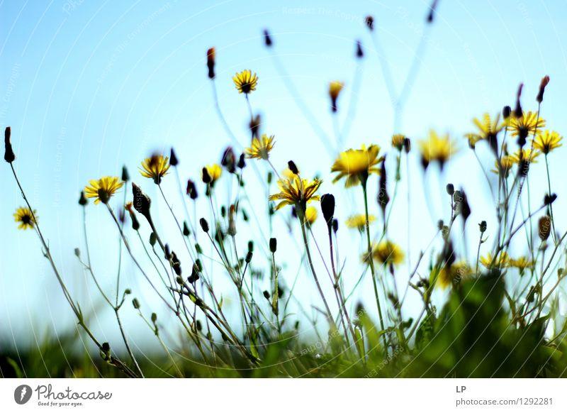ylw Umwelt Natur Pflanze Urelemente Klima Schönes Wetter Blume Gras Blatt Blüte Wildpflanze Garten Park Wiese Feld ästhetisch außergewöhnlich Coolness fest