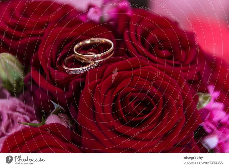 Rosarote Hochzeit Pflanze Blume Rose Blumenstrauß berühren Feste & Feiern glänzend schön mehrfarbig rosa Glück Fröhlichkeit Liebe Kunst Hochzeitspaar