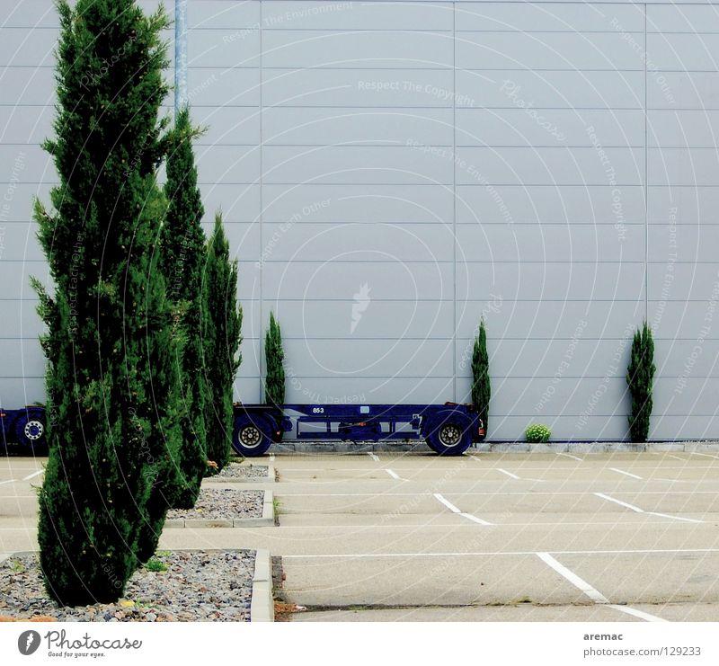 Grünanlage grün Baum Pflanze Fassade leer Parkplatz Nadelbaum Konifere