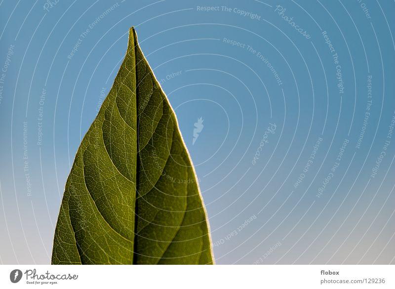 Hallo Sonne! Natur Himmel Baum grün blau Pflanze Sommer Wolken Leben springen Frühling Wärme Kraft Umwelt geschlossen frisch