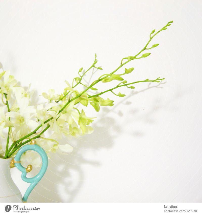 manfred krug weiß Pflanze Blume Farbe Blüte gold mehrere Erfolg Wachstum Dekoration & Verzierung Klettern Lebewesen Stengel türkis dick Urwald