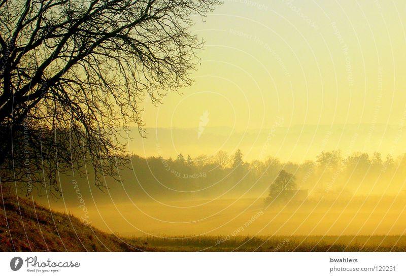Morgenstimmung 5 Himmel Sonne gelb Ferne Wald Herbst Wiese Landschaft Nebel Ast Tal Berge u. Gebirge