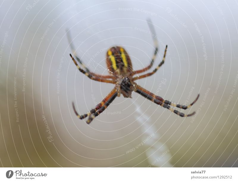 Spider Natur Tier dunkel Umwelt klein grau braun Behaarung Wildtier warten beobachten Platzangst Gelassenheit dünn Netz Wachsamkeit