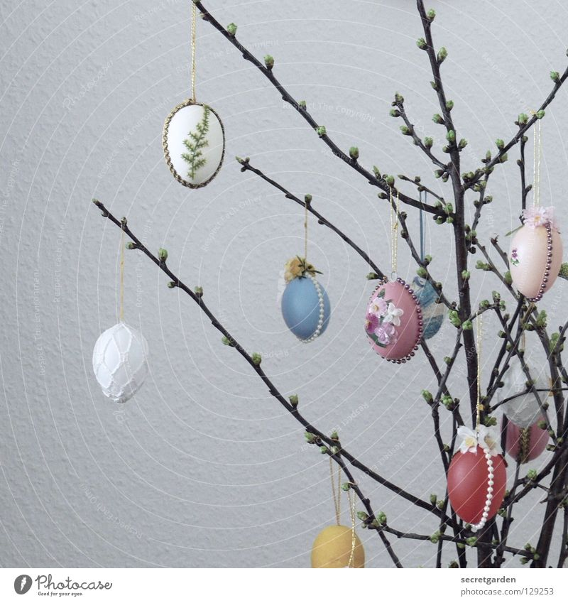 selbst gehäkelt Katze Natur Pflanze schön weiß Blume rot Winter Frühling springen Wohnung liegen Raum Dekoration & Verzierung elegant Sträucher