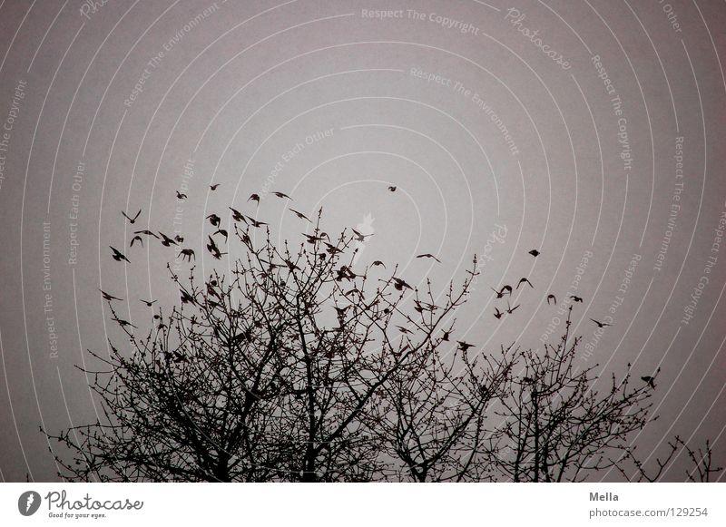 Aufbruch im Schneegestöber Natur Baum Pflanze Winter Tier kalt grau Zusammensein Vogel Umwelt fliegen Beginn trist natürlich viele Baumkrone