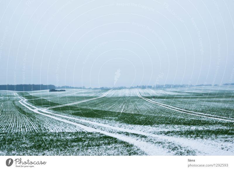 spuren im grün Winter Landwirtschaft Feld Schnee Spuren Himmel Frost kalt