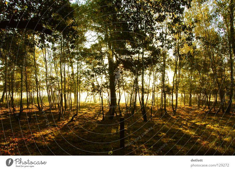 Wahner Heide 22 Sonnenaufgang Morgen braun grün gelb wandern Licht Nebel Sonnenstrahlen Farbe Herbst Landschaft Himmel Erde Spaziergang Natur Reflektion