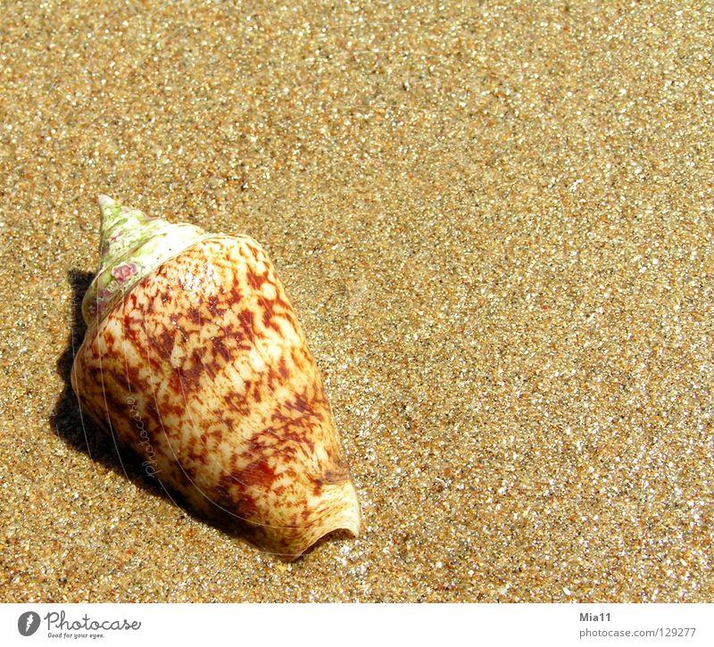 Angeschwemmt Strand Muschel Ferien & Urlaub & Reisen Meer Türkei Sommer Küste Sand Schnecke Side Erholung