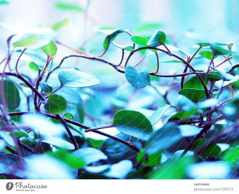 grünblau Natur Pflanze Blatt kalt Regen Sträucher natürlich Dinge unordentlich Topfpflanze