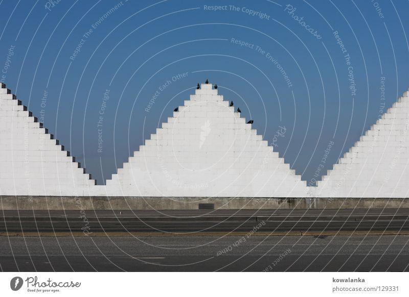 gipfeltreffen Himmel weiß blau Straße Vogel warten sitzen Kommunizieren beobachten Sitzung Verkehrswege Schönes Wetter Geometrie Verabredung Symmetrie Dreieck