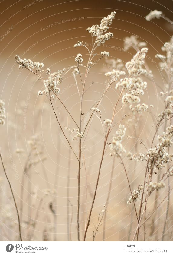 Wintergras Natur Pflanze Herbst Vergänglichkeit zart trocken Halm zerbrechlich verblüht Wildpflanze Gräserblüte