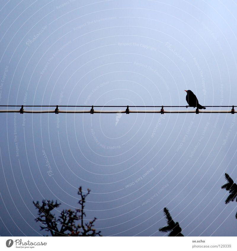 Warten auf... Himmel Baum blau ruhig Einsamkeit Vogel warten Kabel Aussicht Baumkrone Draht Abenddämmerung Leitung überblicken