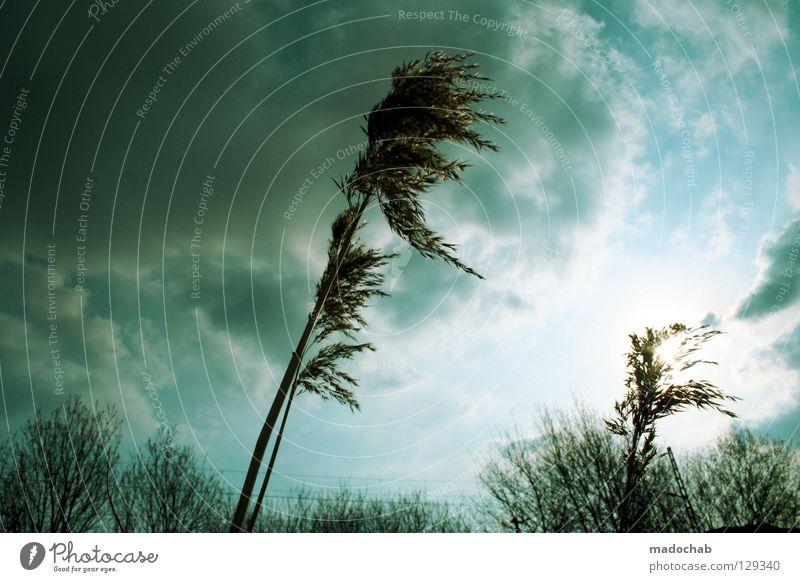 STÜRMISCHE ZEITEN Sturm Natur Pflanze Unwetter Windgeschwindigkeit stark Macht unruhig kalt schlechtes Wetter Wechseln unbeständig grün wackeln Wolken
