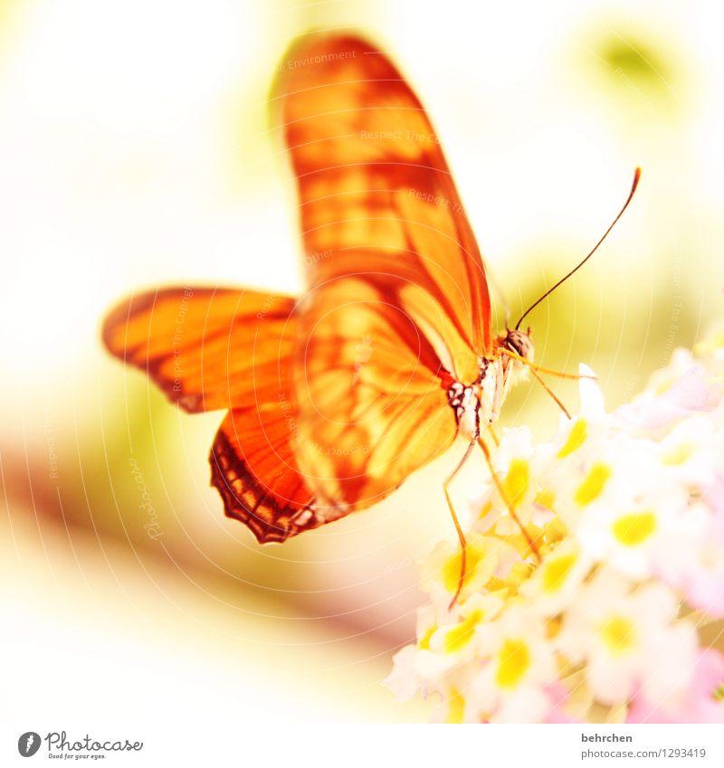 die sonne geht auf... Natur Pflanze Tier Frühling Sommer Blume Blatt Blüte Garten Park Wiese Wildtier Schmetterling Flügel 1 Blühend Erholung fliegen Fressen