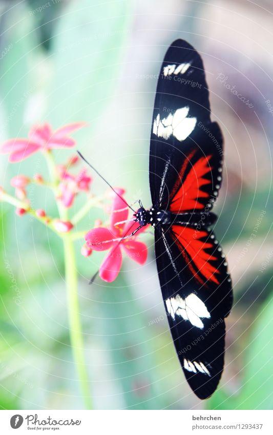 schwarz rot...weiß Natur Pflanze grün schön Sommer weiß Blume rot Blatt Tier schwarz Blüte Frühling Wiese Garten außergewöhnlich