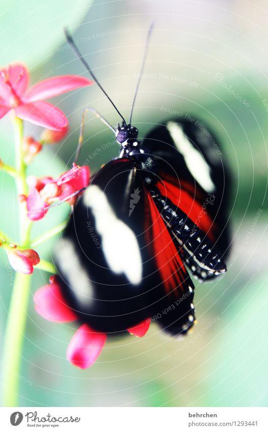 glänzend Natur Pflanze Tier Frühling Sommer Schönes Wetter Blume Blatt Blüte Garten Park Wiese Wildtier Schmetterling Tiergesicht Flügel Facettenauge Fühler