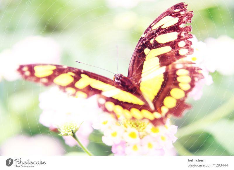 fransig Natur Pflanze Tier Blume Blatt Blüte Garten Park Wiese Wildtier Schmetterling Flügel 1 beobachten Blühend Duft Erholung fliegen Fressen außergewöhnlich