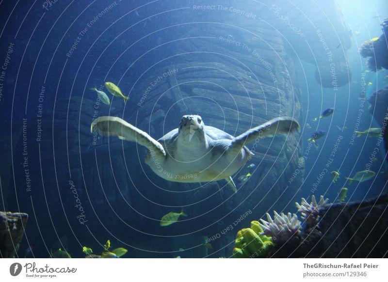 hey dude Schildkröte Aquarium grün gefangen Sealife München Holz blau Schwimmhilfe turtle trojanisches pferd Pflanze Glas Unterwasseraufnahme blue