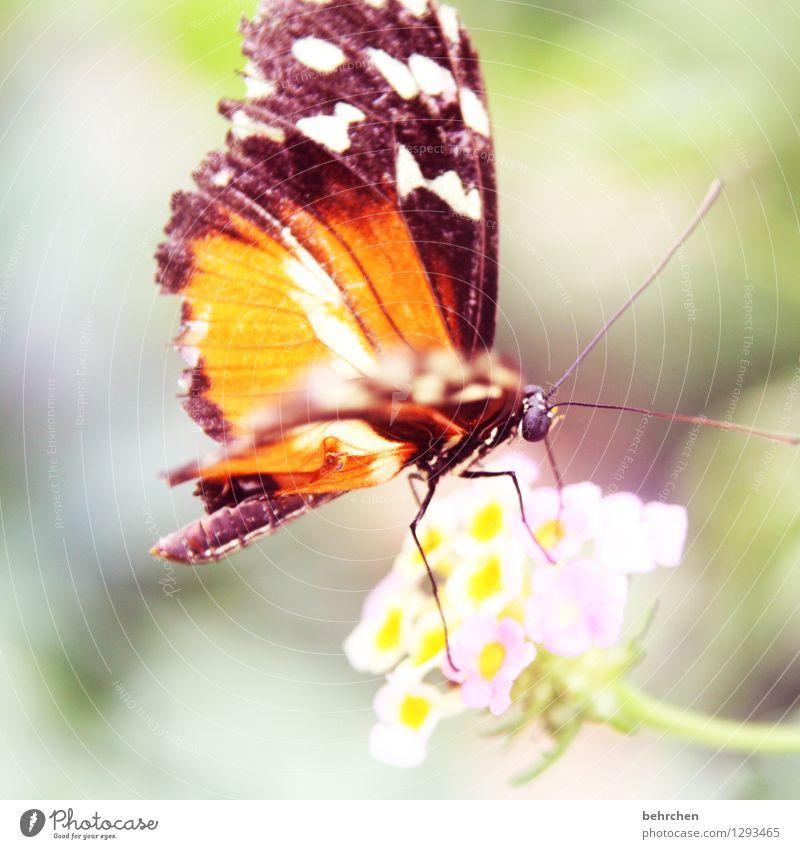 flatterhaft Natur Pflanze schön Blume Tier Blüte Auge Wiese Garten außergewöhnlich fliegen Park elegant Wildtier Flügel Blühend