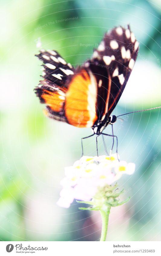 abheben Natur Pflanze Tier Frühling Sommer Blume Blatt Blüte Garten Park Wiese Wildtier Schmetterling Flügel 1 beobachten Bewegung fliegen sitzen