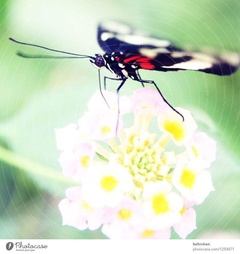 sau(g)stark Natur Pflanze Tier Frühling Sommer Schönes Wetter Blume Blatt Blüte Garten Park Wiese Wildtier Schmetterling Tiergesicht Flügel Facettenauge 1