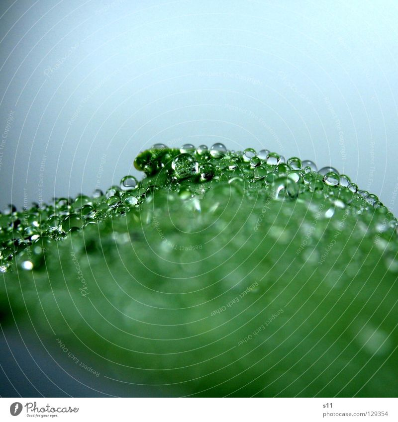 WaterPerls Natur Pflanze schön grün Wasser Gesundheit oben hell Regen glänzend Kraft Wassertropfen nass Vergänglichkeit Flüssigkeit