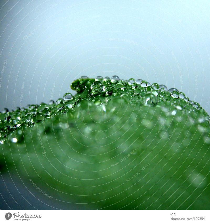 WaterPerls Wassertropfen nass hydrophob grün Pflanze glänzend Flüssigkeit schön Vergänglichkeit Makroaufnahme Nahaufnahme Kraft Kugel Regen spritzen Tulpenblatt