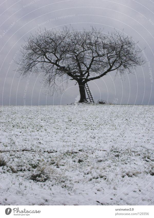 Der Baum 4 Feld Wiese Himmel Wolken Leiter Winter Schnee Landschaftsformen Horizont Natur Landwirtschaft Einsamkeit kalt Trauer weiß grau blau Ackergerät