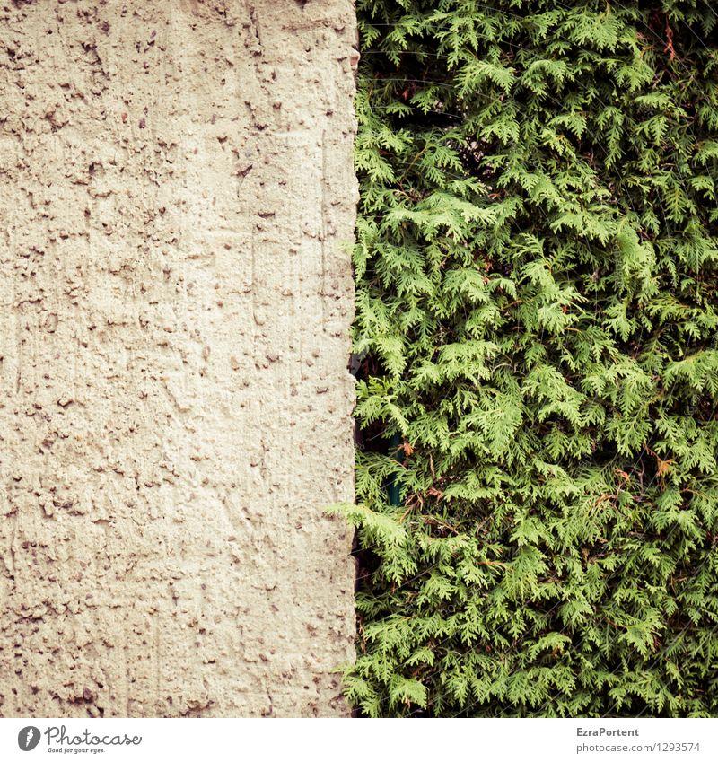 entweder oder Umwelt Natur Pflanze Sträucher Blatt Grünpflanze Haus Bauwerk Gebäude Mauer Wand Fassade Linie Streifen grau grün Schutz Einigkeit Konkurrenz