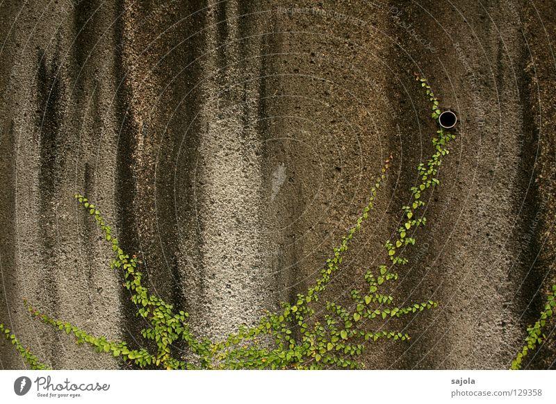 grossstadtdschungel alt grün Pflanze schwarz Wand grau Stein Mauer dreckig Vergänglichkeit Streifen festhalten Loch aufwärts Abfluss gestreift
