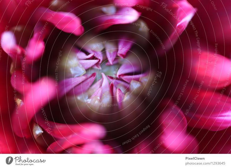 Blüte Natur Pflanze schön Farbe Blume rot Leben Stil Garten Lifestyle Stimmung rosa Park träumen Zufriedenheit