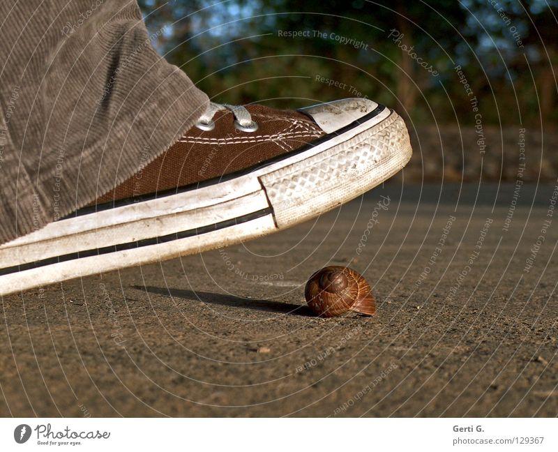 symbolizer Wachsamkeit Kontrolle Vorsicht achtsam treten zerquetschen Schuhe Chucks Turnschuh Symbole & Metaphern retten braun Haus Schneckenhaus