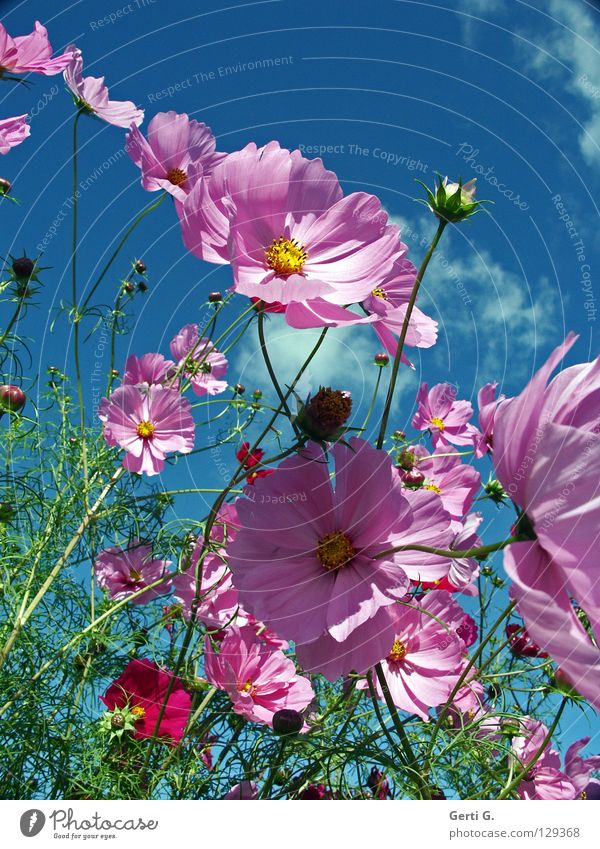 easybeasy schön Himmel Blume grün blau Pflanze Sommer Freude Wolken gelb Herbst Gefühle Blüte Bewegung Frühling Glück