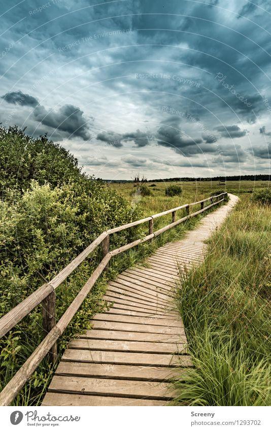 Umschwung Ferien & Urlaub & Reisen Tourismus Ausflug wandern Natur Landschaft Pflanze Himmel Wolken Sommer schlechtes Wetter Baum Gras Sträucher Eifel