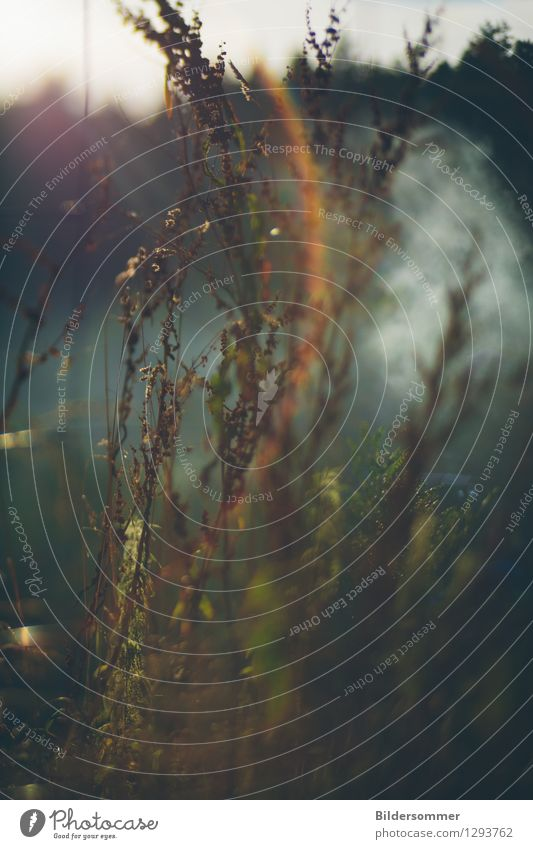 . Natur Pflanze Nebel Gras Sträucher Wildpflanze Wiese Regenbogen Reflexion & Spiegelung Blendenfleck Blendeneffekt Unkraut Zaun Rauchzeichen Farbfoto