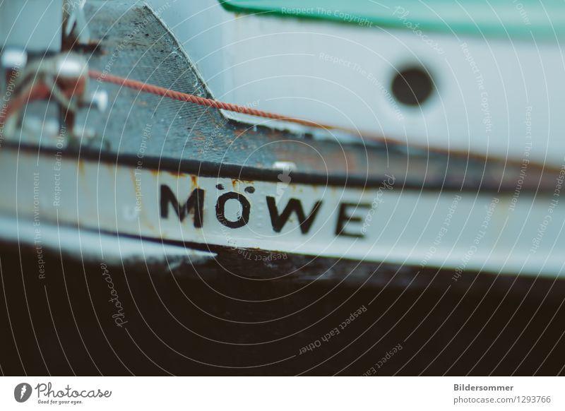 . Schifffahrt Bootsfahrt Fischerboot Wasserfahrzeug Hafen Seil maritim grün schwarz weiß Möwe Vogel Ostsee Bordwand Tilt-Shift nordisch Segeln See Farbfoto